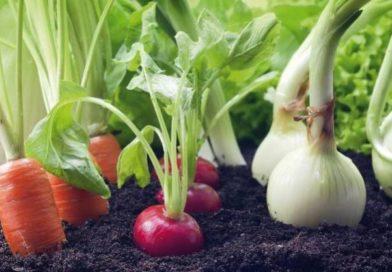 Vegetales1123